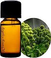 health benefits of angelica oil